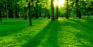 Image result for environment