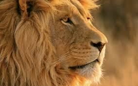 「獅子」的圖片搜尋結果