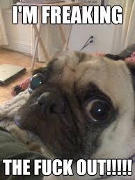 Nervous Pug memes | quickmeme via Relatably.com
