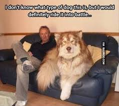 Big dog 'bro' meme... why is this so funny to me? | l a u g h ... via Relatably.com
