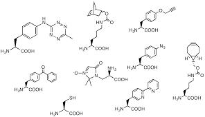 click chemistry unnatural amino acids