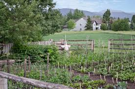 file kitchen garden and scarecrow tinsley living farm museum file kitchen garden and scarecrow tinsley living farm museum of the rockies