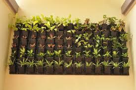 Landscaping :: Vertical Gardening - Horticulture