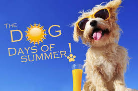 Image result for a picture of dog days