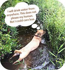 Πίνω νερό...