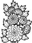 Раскраски цветы. скачать и распечатать раскраски