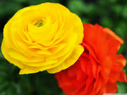 Image result for images of flowers hd