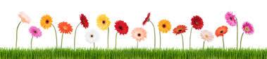Resultado de imagen para flowers in a row images