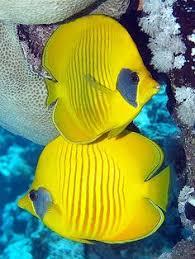 196 Best ทะเล images in 2019 | Underwater life, <b>Ocean</b> life, <b>Ocean</b> ...