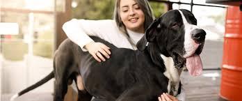 Чем кормить собаку, если она болеет — советы в Журнале ...