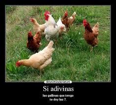 Resultado de imagen de fotos de gallinas