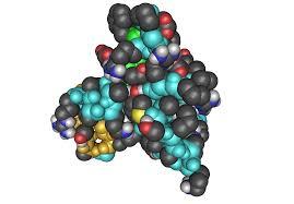 Resultado de imagem para somatomedina c igf-i