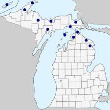 Pinguicula vulgaris - Michigan Flora