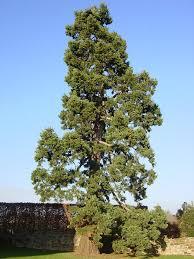 <b>Дерево</b> — Википедия