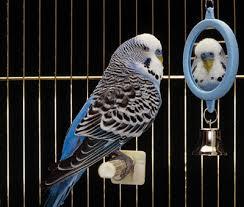 kafeste kuş resmi ile ilgili görsel sonucu