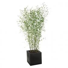 Plant <b>BAMBOO 180</b>/200 - Aliance Mobilier