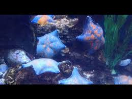 <b>МОРСКАЯ ЗВЕЗДА</b> красивые необычные <b>морские звезды</b> ...