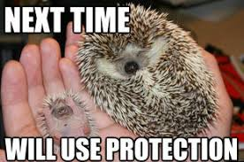 25 Adorable Hedgehog Memes via Relatably.com