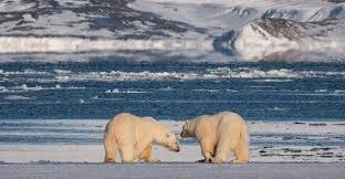Svalbard in <b>Spring</b>: Polar Bears, <b>Arctic Light</b> & Epic Ice