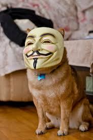 https://encrypted-tbn1.gstatic.com/images?q=tbn:ANd9GcQTd0O-C75tYLLy9Ji0QBbNKgzAsWm1nVDSq2EMJ9UdQaaHnWJn