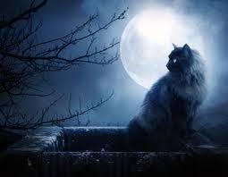 Resultado de imagen de gato inquisición