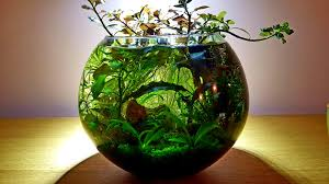 My precious green ball. <b>Aquael fan</b> filter micro, <b>3</b> gallon bowl ...