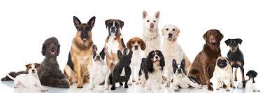 Afbeeldingsresultaat voor hondenrassen