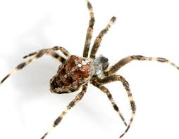 Get rid of and control spiders in Racine, Kenosha, Walworth ...