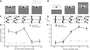a visual horizon affects steering responses during flight in fruit figure