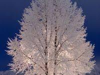 208 Best winter images in 2018   Winter landscape, Beautiful ...