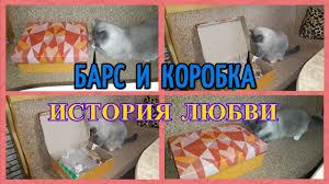 Барс и коробка. <b>История</b> любви - YouTube
