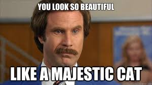 You look so beautiful Like a majestic cat - Misc - quickmeme via Relatably.com