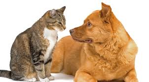 A thread for dog and cat lovers - Page 3 Images?q=tbn:ANd9GcQUBFatSKfGljhLzbdrPk7ixhY5ocTqZrhX2CWSYecdKgApA5tX