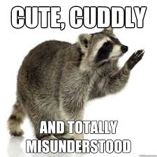 cute, cuddly and totally misunderstood - Rascally raccoon - quickmeme via Relatably.com
