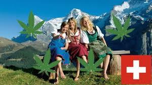 Výsledek obrázku pro svycarsko konopi legalizace.cz
