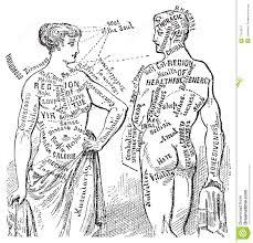 medical anotomical vintage diagram illustration royalty free stock    medical anotomical vintage diagram illustration