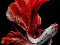 Красочные рыбы: лучшие изображения (51) в 2020 г ...