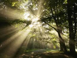 Image result for picture of sunlight