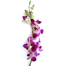 day orchid decor: amazoncom fresh flowers purple dendrobium orchids fresh cut format orchid flowers grocery amp gourmet food
