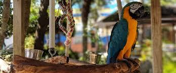 Решено: Чем оборудовать клетку для попугая — подборка в ...