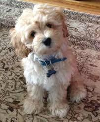 <b>Royal Canin Mini Puppy</b> Food Reiew
