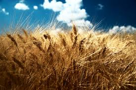 نتیجه تصویری برای کشاورزی پایدار