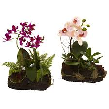 day orchid decor: orchid island set of  dee d a ea af