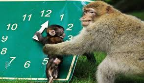 Trentham Monkey Forest: A Great Day Out For All The Family