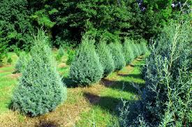 Lebanon Christmas Tree Farm: Family Owned Since 1985 ...