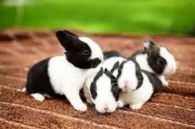 Resultado de imagem para mini coelho banner