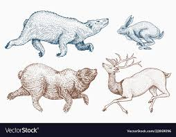 Soaring hare <b>rabbit</b> northern brown <b>bear deer</b> set Vector Image