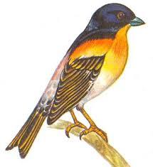 Школьный атлас-определитель <b>птиц</b>