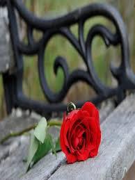 """Résultat de recherche d'images pour """"gifs de roses sous la pluie"""""""