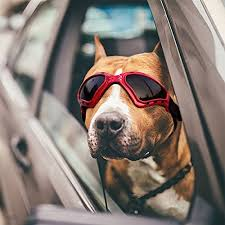 Best <b>Dog Goggles</b> of 2019 (Review & Guide) – Doggle Them Up!